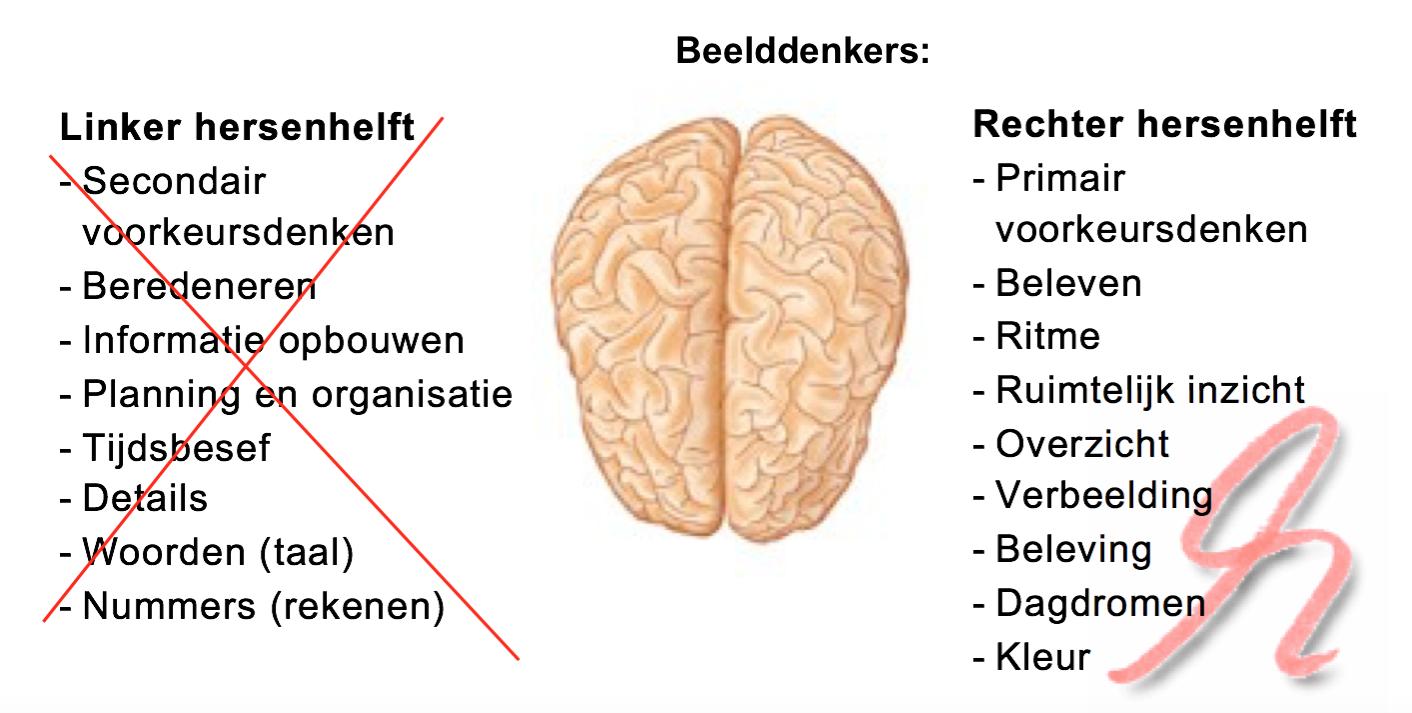 beelddenken hersenen